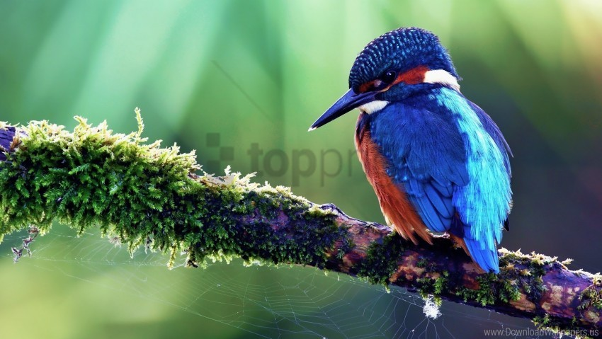 free PNG bird, color, sit, tree, tropical bird wallpaper background best stock photos PNG images transparent