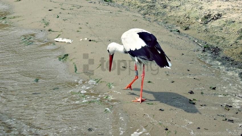 free PNG bird, crane, shore wallpaper background best stock photos PNG images transparent