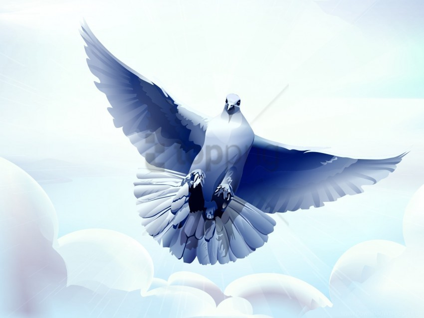 free PNG bird, dove, flying, vector wallpaper background best stock photos PNG images transparent