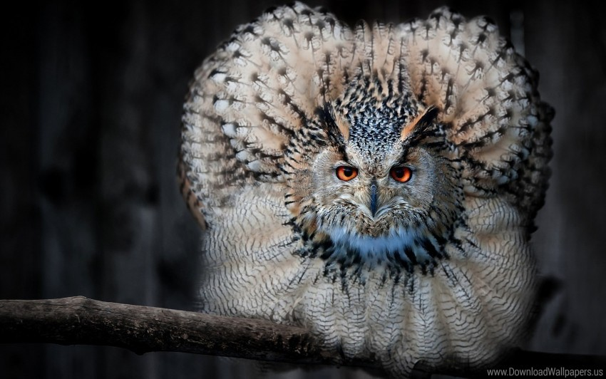 free PNG bird, eagle owl, feathers, owl, predator wallpaper background best stock photos PNG images transparent