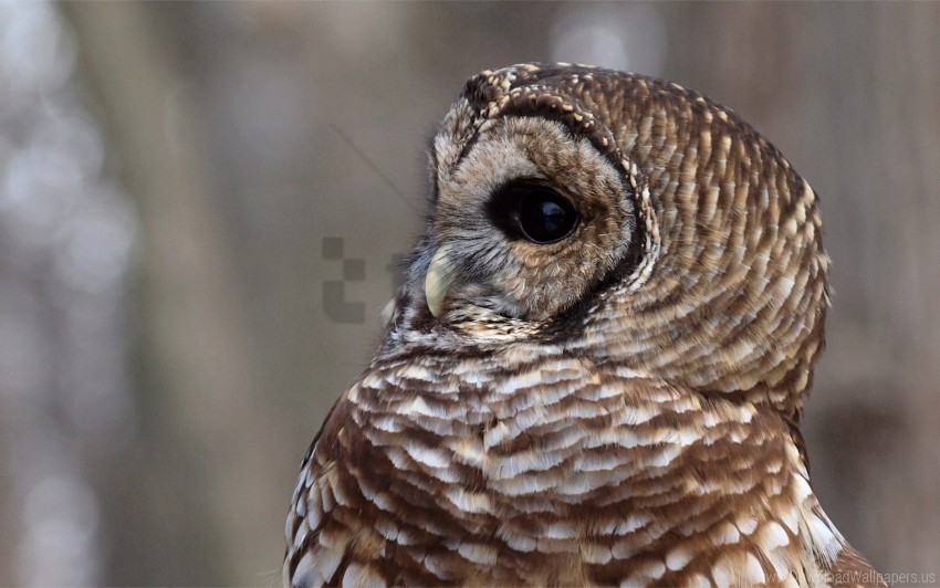 free PNG bird, eyes, face, feathers, owl, predator wallpaper background best stock photos PNG images transparent