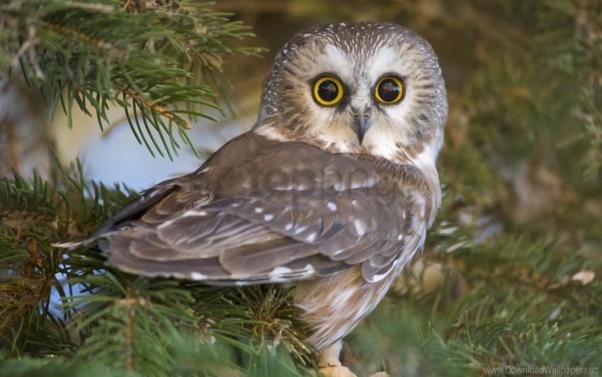 free PNG bird, eyes, owl, predator, surprise wallpaper background best stock photos PNG images transparent