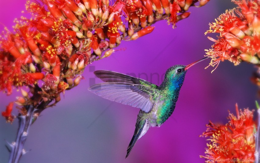free PNG bird, flap, flight, flowers, hummingbird, speed, wings wallpaper background best stock photos PNG images transparent