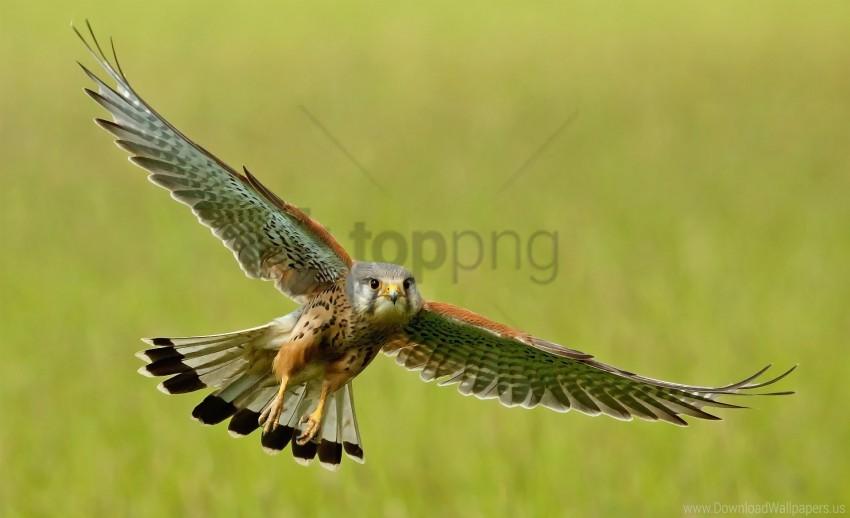 free PNG bird, flap, flight, kestrel, wings wallpaper background best stock photos PNG images transparent