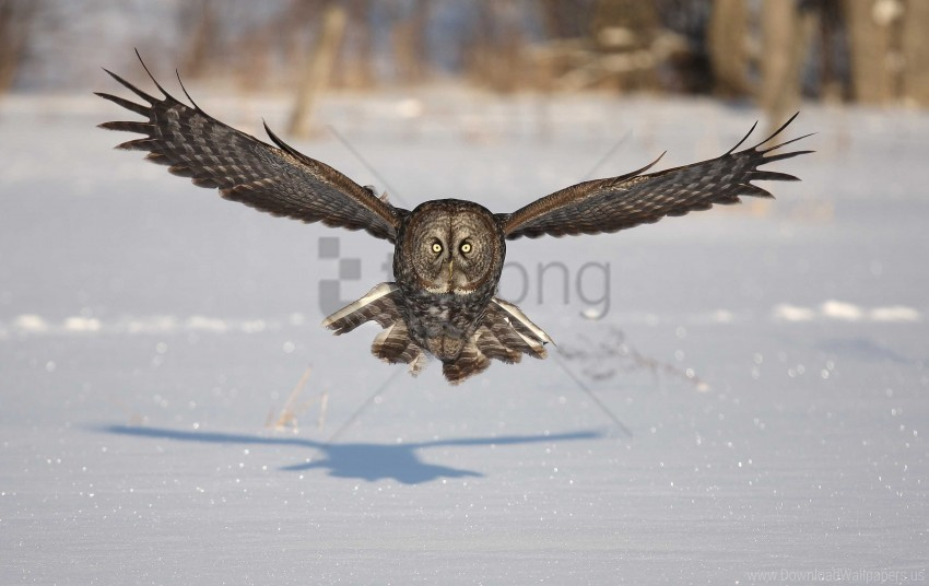 free PNG bird, flap, flight, owl, predator, shadow, snow, wings, winter wallpaper background best stock photos PNG images transparent