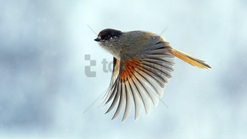 free PNG bird, flap, flight, wings wallpaper background best stock photos PNG images transparent