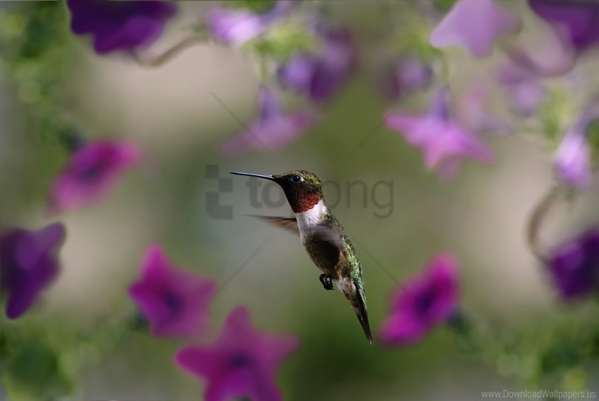 bird, flap, hummingbird, wings wallpaper background best stock photos@toppng.com