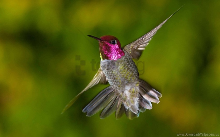 free PNG bird, flap, hummingbirds, wings wallpaper background best stock photos PNG images transparent