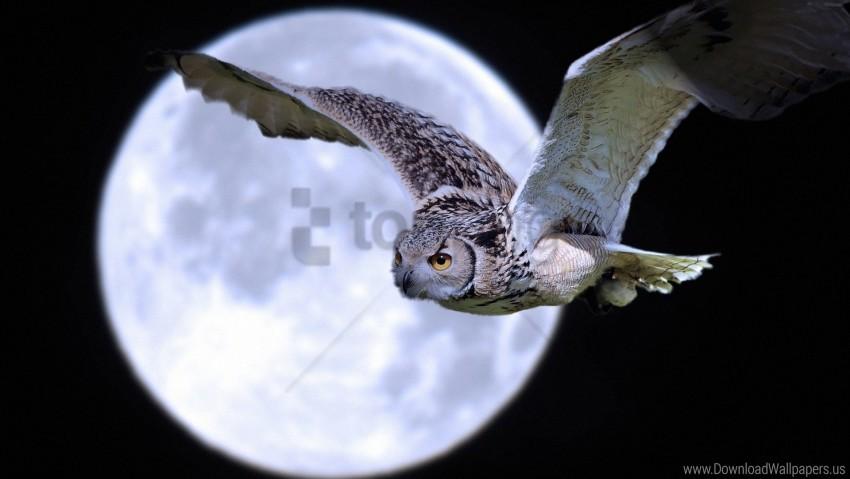 free PNG bird, flight, moon, owl, predator wallpaper background best stock photos PNG images transparent