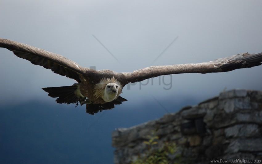 free PNG bird, flight, predator, sky, vulture, wings wallpaper background best stock photos PNG images transparent