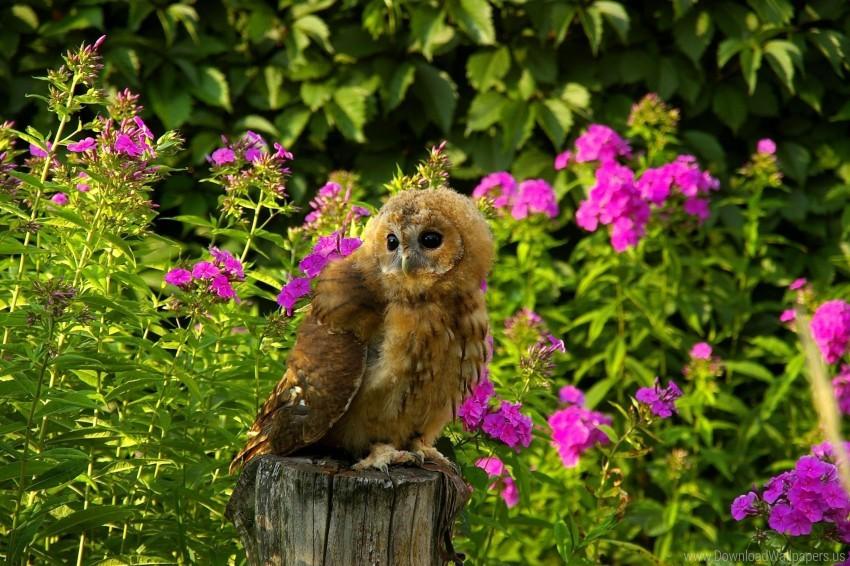 free PNG bird, flowers, grass, owl, predator, sit, timber wallpaper background best stock photos PNG images transparent