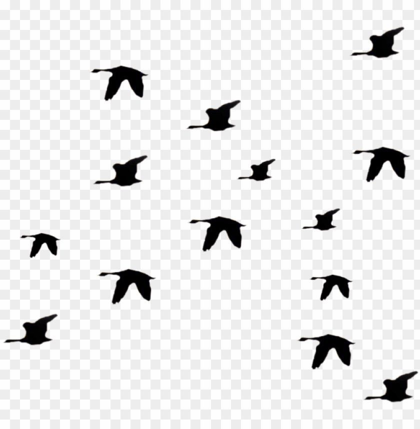 Bird Fly Png Clipart Li Ry Silhouette Birds Flying Away Png Image With Transparent Background Toppng