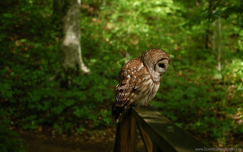 bird, forest, owl, predator wallpaper background best stock photos@toppng.com