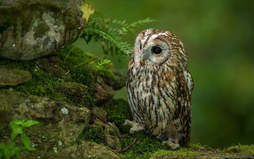 free PNG bird, grass, hunting, owl, predator, sit, waiting wallpaper background best stock photos PNG images transparent