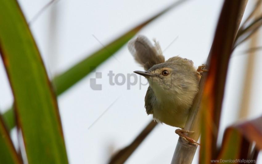 free PNG bird, grass, stick, twig wallpaper background best stock photos PNG images transparent