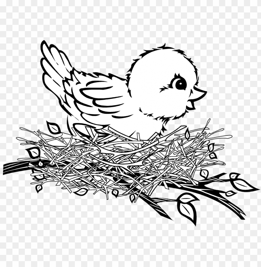 free PNG bird in nest PNG image with transparent background PNG images transparent
