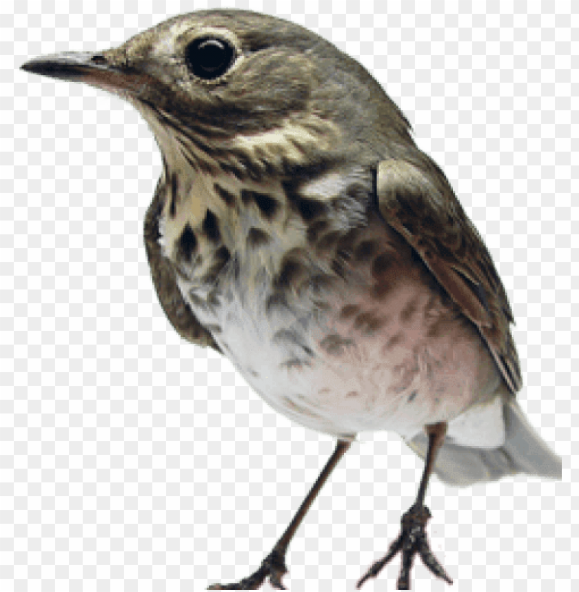 free PNG bird in the hand PNG image with transparent background PNG images transparent