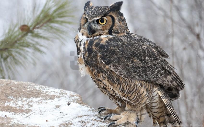 free PNG bird, look, owl, predator wallpaper background best stock photos PNG images transparent