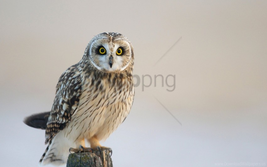 free PNG bird, look, owl, predator wallpaper background best stock photos PNG images transparent