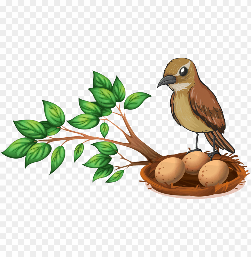 free PNG bird nest on tree PNG image with transparent background PNG images transparent