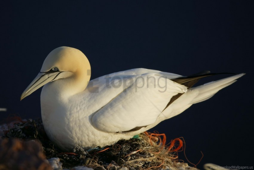 free PNG bird, nest, seagull wallpaper background best stock photos PNG images transparent