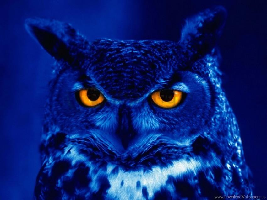 free PNG bird, night, owl, predator, yellow eyes wallpaper background best stock photos PNG images transparent