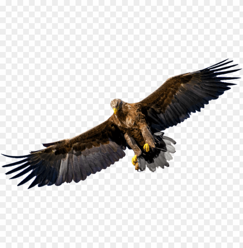 Bird Of Prey Silhouette Png Image With Transparent Background Toppng