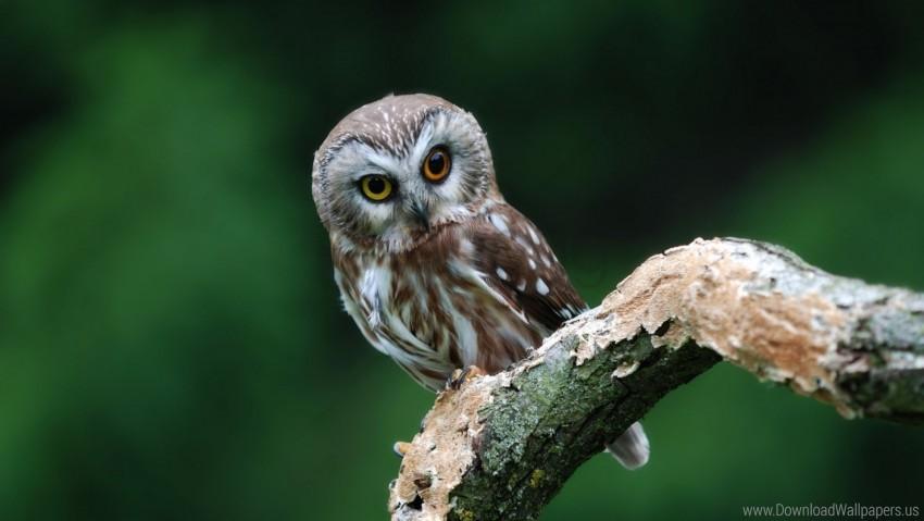 free PNG bird, owl, predator wallpaper background best stock photos PNG images transparent
