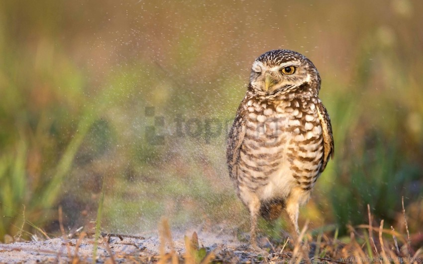 free PNG bird, owl, predator wallpaper background best stock photos PNG images transparent