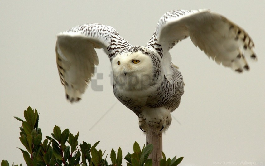 free PNG bird, owl, predator, wings wallpaper background best stock photos PNG images transparent