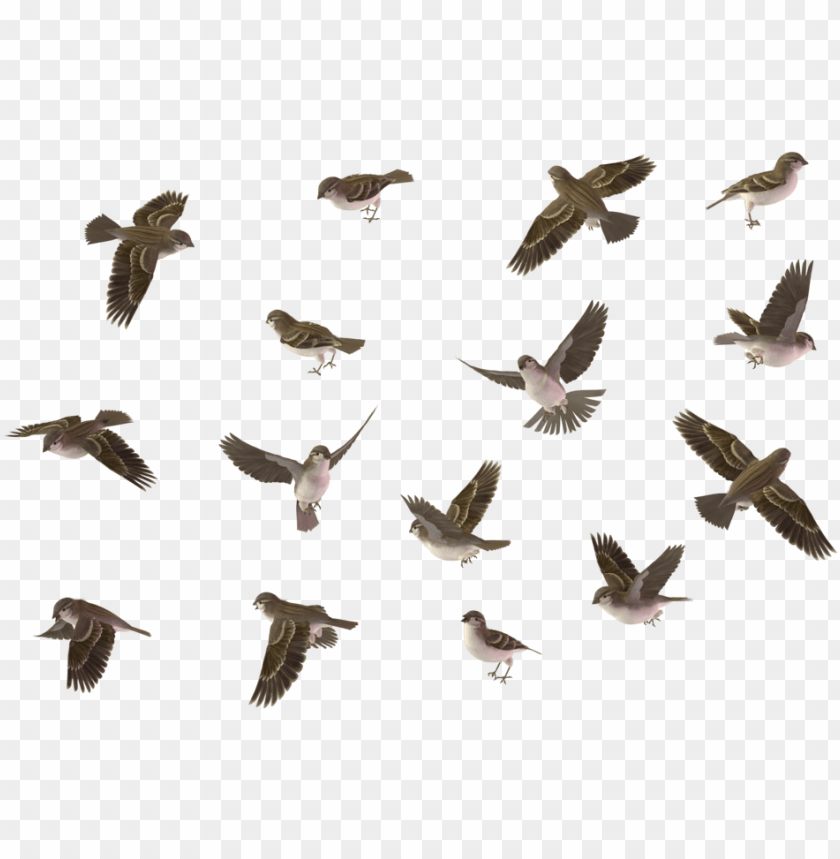 free PNG bird set house sparrow female 01 by wolverine house - bird set PNG image with transparent background PNG images transparent