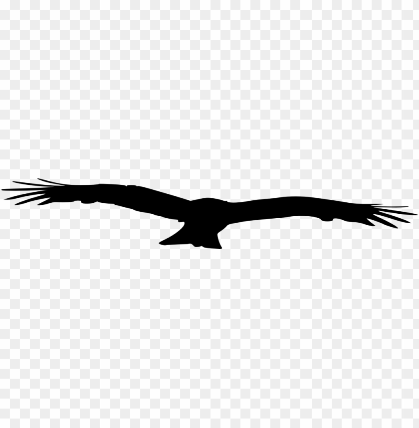 free PNG bird silhouette png - Free PNG Images PNG images transparent