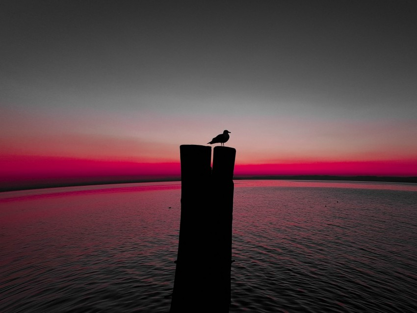 bird, silhouette, pillar, seagull, horizon, sea background@toppng.com