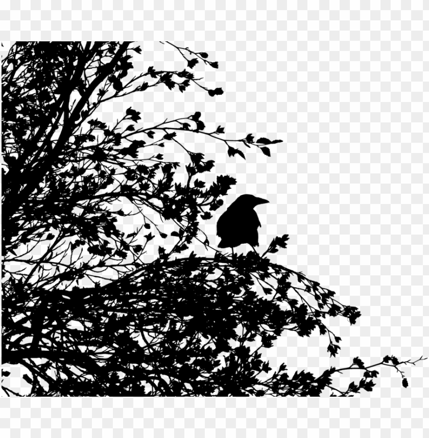 free PNG bird tree common raven crow family silhouette - disintegration effect black and white PNG image with transparent background PNG images transparent