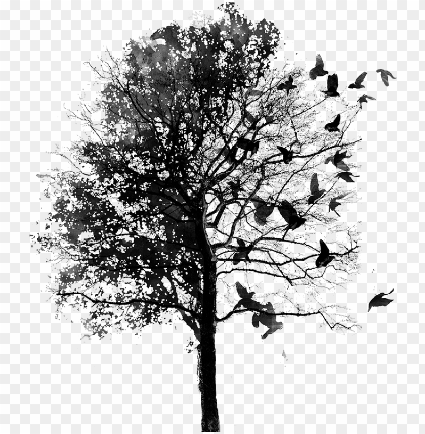 free PNG bird & tree png - fall instagram theme divider PNG image with transparent background PNG images transparent