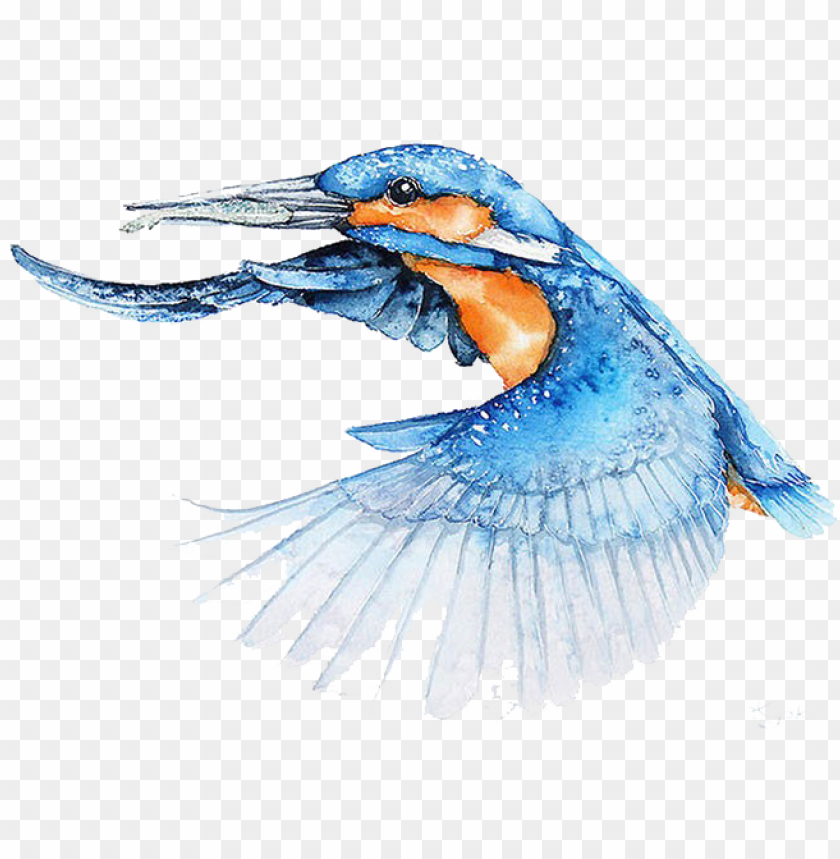free PNG bird watercolor painting architect illustrator - bird flying watercolor PNG image with transparent background PNG images transparent