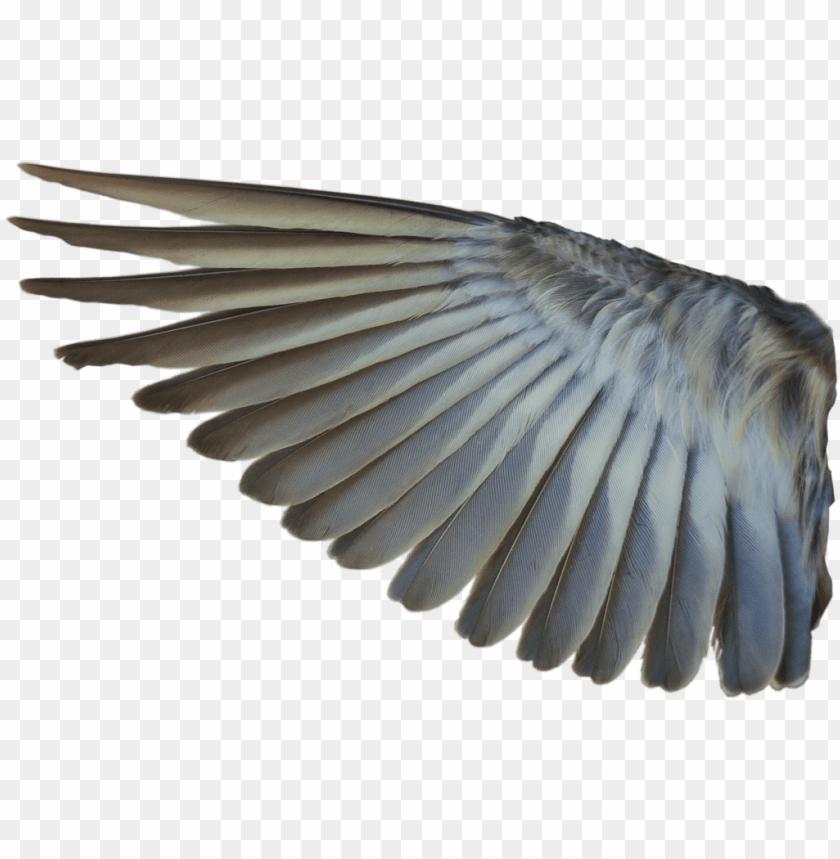 free PNG bird wings png - bird wing transparent background PNG image with transparent background PNG images transparent