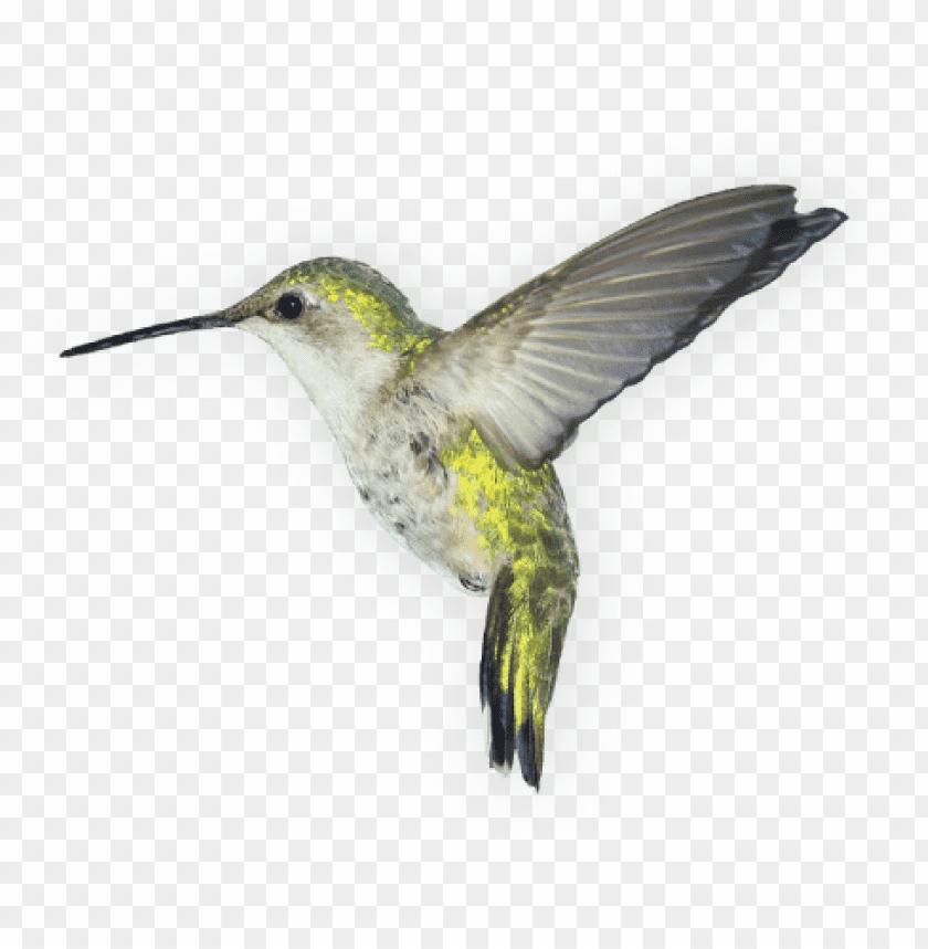 free PNG Download Birds png images background PNG images transparent