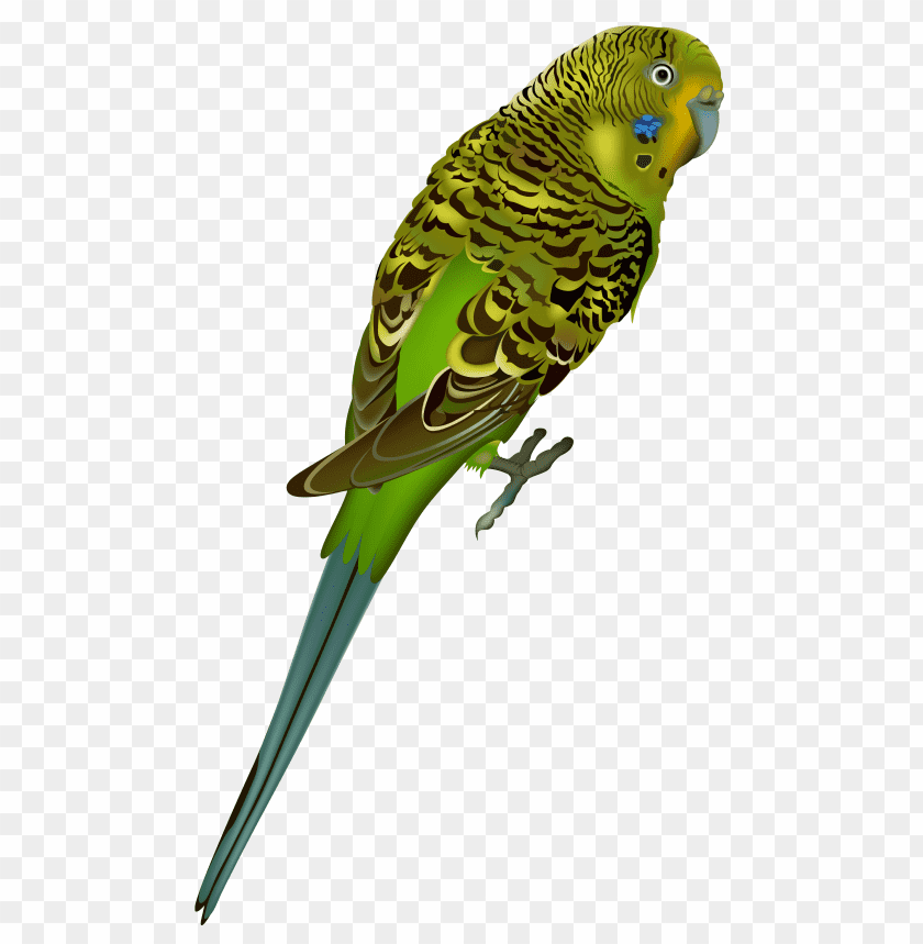 Download birds png images background@toppng.com
