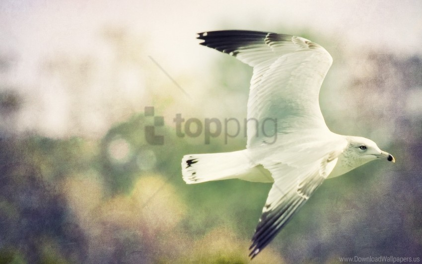 free PNG birds, blurred, flight, sky, wings wallpaper background best stock photos PNG images transparent