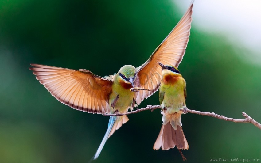 free PNG birds, branch, couple, flap, wings wallpaper background best stock photos PNG images transparent