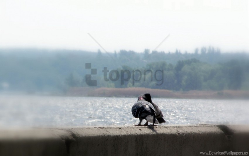 free PNG birds, doves, pair, river wallpaper background best stock photos PNG images transparent