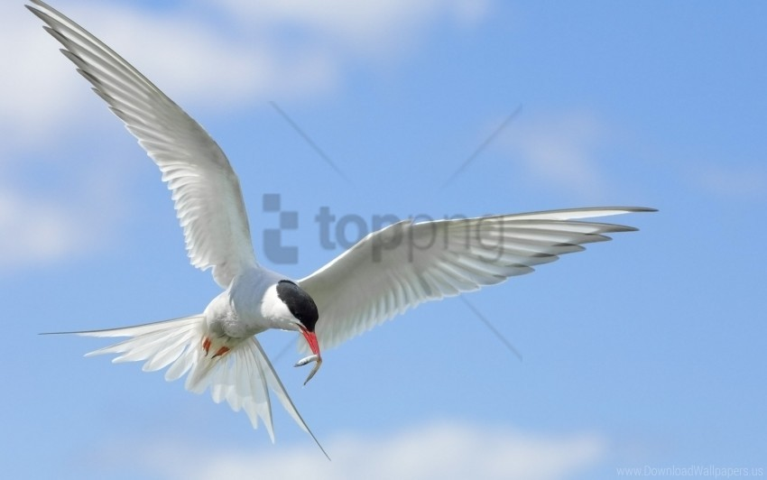 free PNG birds, flap, flying, sky, wings wallpaper background best stock photos PNG images transparent
