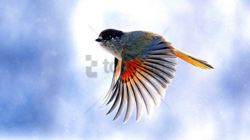 free PNG birds, flap, flying, wings wallpaper background best stock photos PNG images transparent