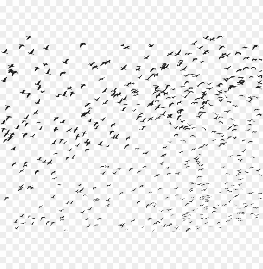 free PNG birds, flock, flying, animals, silhouette - flying bird bird PNG image with transparent background PNG images transparent