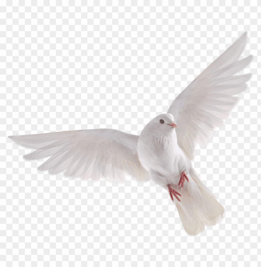 free PNG Download birds free pictures png images background PNG images transparent