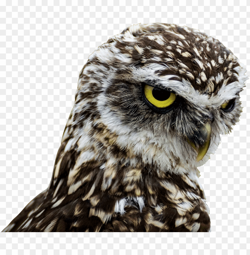 Birds Of Prey Good Morning Png Image With Transparent Background Toppng