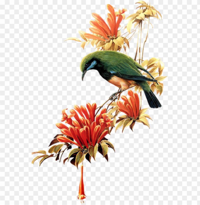 free PNG birds on branches - birds PNG image with transparent background PNG images transparent