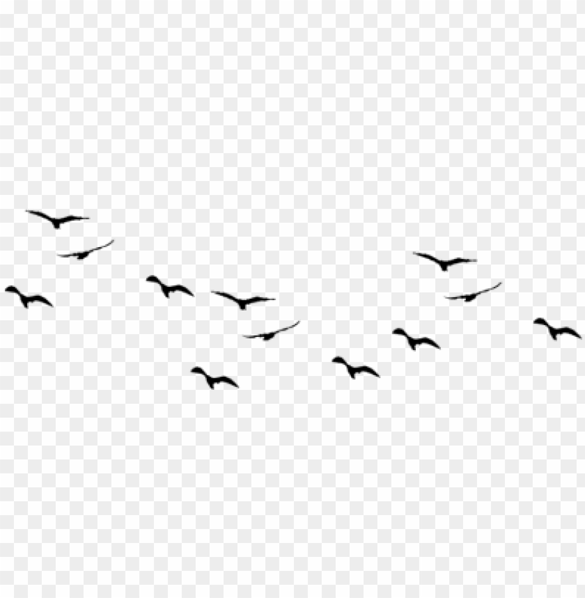 free PNG birds pic flock of - birds flying vector PNG image with transparent background PNG images transparent
