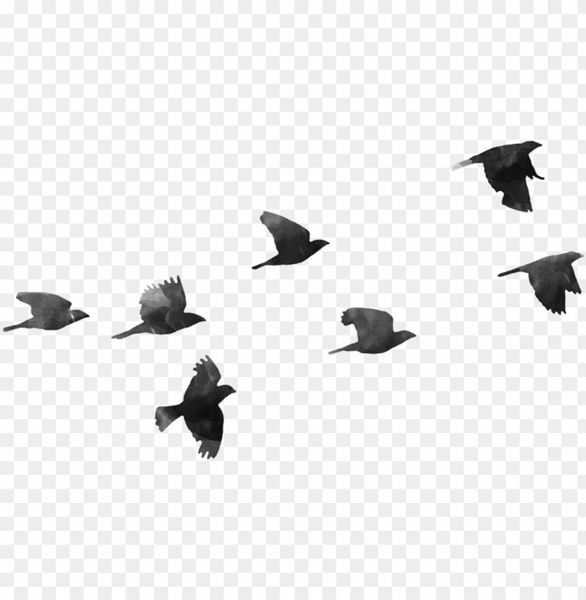 free PNG birds png - birds transparent PNG image with transparent background PNG images transparent